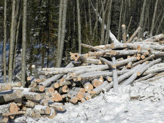 Опрокинулся лесовоз