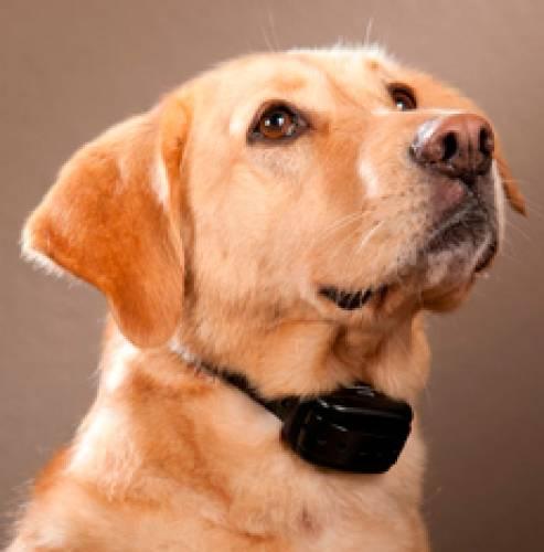 Интернет магазин товаров для собак shop-wolcha 00b7ba1c28ebab6756ceb5d1a00f8e05