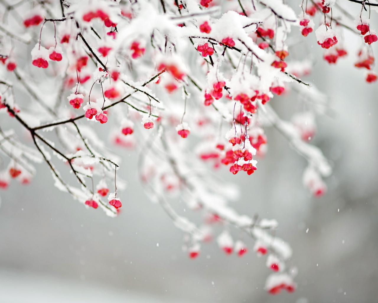 Зима необычные обои на рабочий стол
