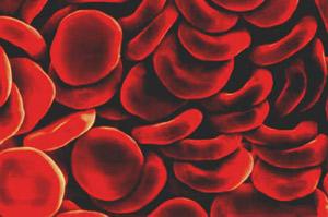 Органы кроветворения и иммунной защиты