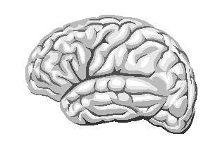 Серое и белое вещество головного мозга