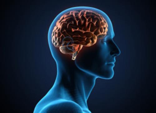 О субстрате следов памяти в мозге