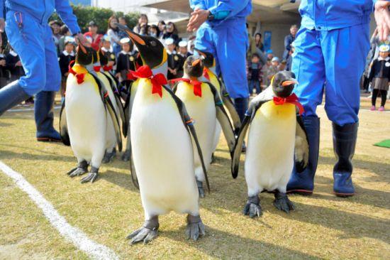 Парад пингвинов