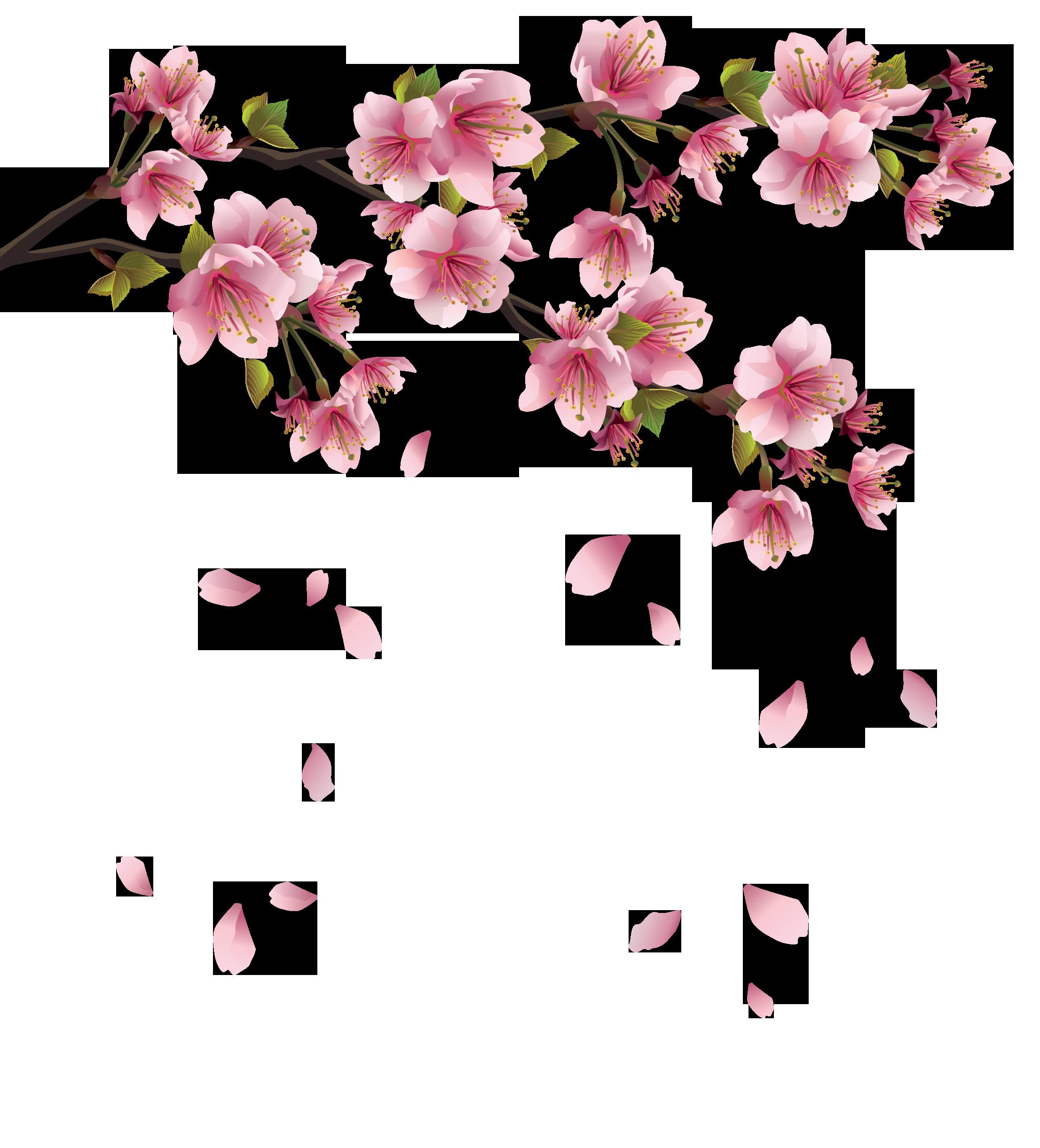 нужно розовая сакура картинки на прозрачном фоне заканчивается согласно